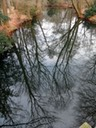 Tiergarten reflection
